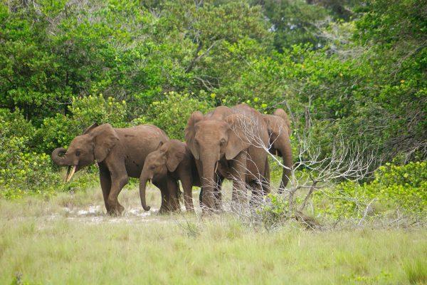 DG_Category_Loango National Park